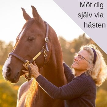 FEEL - Facilitated Equine Experiental Learning